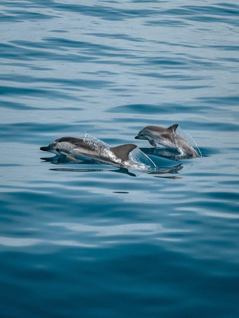 Dolphins of Madagascar