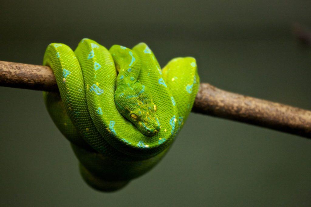 Snake Lokobe Reserve
