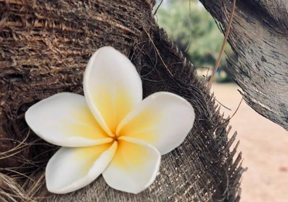 Flower in Nosy Fanihy